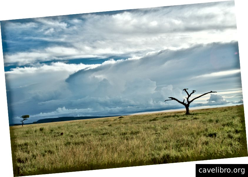 Serengeti, Tanzanie (crédit: Cameron Breslin)
