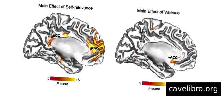 जे। मोरन, एट द्वारा अध्ययन से छवि। अल। बाईं ओर, हम MPFC में सक्रियता देख सकते हैं जब मस्तिष्क निर्धारित कर रहा है कि कुछ अपने बारे में सच है। दाईं ओर, हम vACC फायरिंग देख सकते हैं जब इस विवरण की भावनात्मकता के संबंध में। इन चित्रों में मस्तिष्क का अग्र भाग दाईं ओर है।