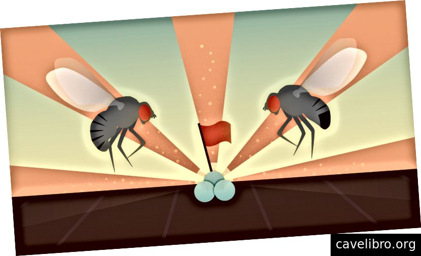 L'attrait irrésistible des déjections de mouches. Illustration de Milena Menezes Carvalho / RIKEN