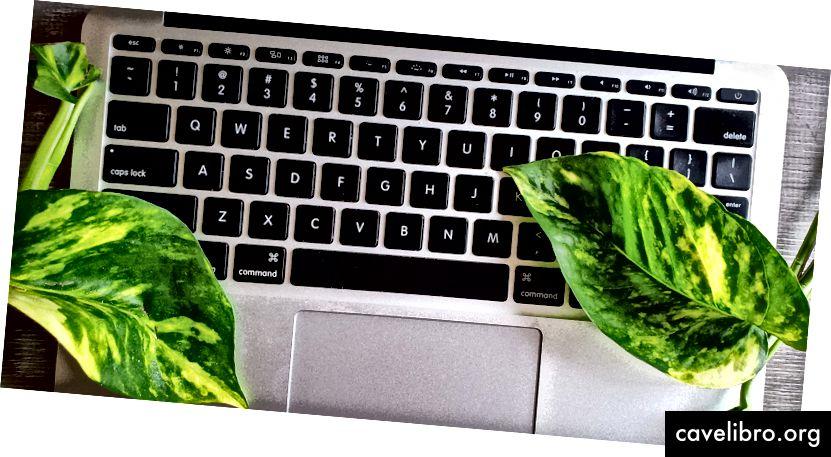 Comme ces plantes, vous pouvez aussi grandir sur des claviers. (Photo: Ashley Juavinett)