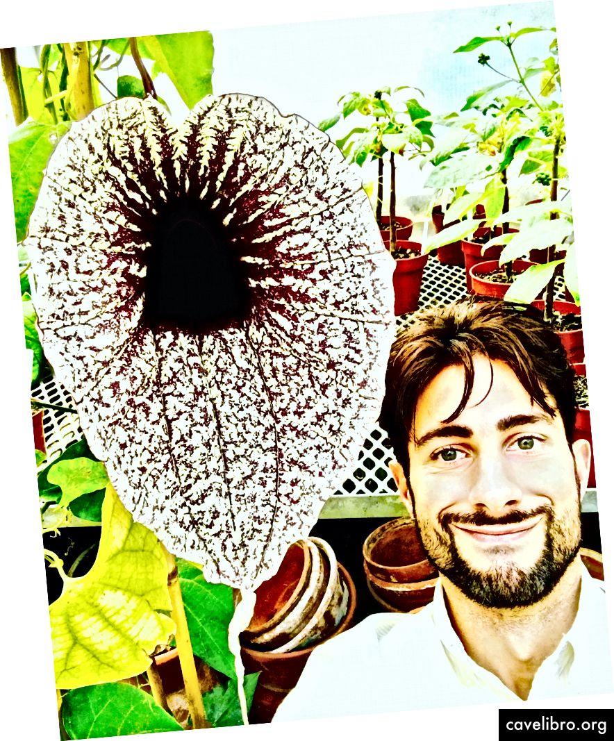 L'auteur à la fleur de pélican