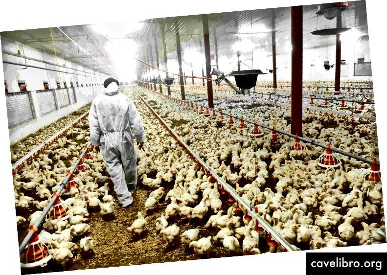 Comme vous pouvez le constater, il y a plus de poulets que de personnes. En 2019, la population des États-Unis était d'environ 328 millions d'habitants en comparaison.