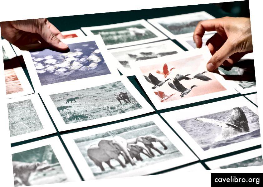 Utilisez les cartes d'animaux pour raconter des histoires percutantes sur ce qui compte le plus lorsque vous travaillez avec d'autres personnes. Crédit photo: Jason Mar.