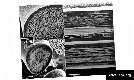Micrographies électroniques à balayage de fibres synthétiques ou artificielles imitant les propriétés optiques des fibres de cocon de papillon de comète. Rangée du haut: coupes transversales et longitudinales, respectivement, d'une fibre synthétisée en soie régénérée contenant une forte densité de vides d'air filamenteux. Rangée du bas: images correspondantes d'une fibre de PVDF (polyfluorure de vinylidène) contenant une haute densité de vides filamenteux.