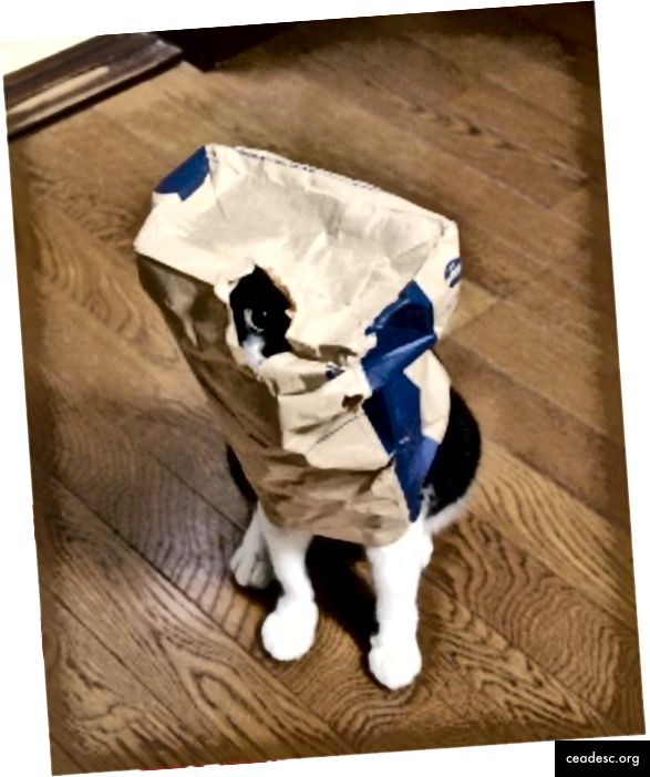 Las críticas pueden incluir puntos de vista poco comunes de los gatos: tumbados sobre un teclado, vestidos con un disfraz o escondidos en una bolsa. Aunque estos puntos de vista son atípicos, todavía son imágenes de gatos y deben incluirse en la categoría. Mostrar críticas como estas puede prevenir la generalización excesiva.