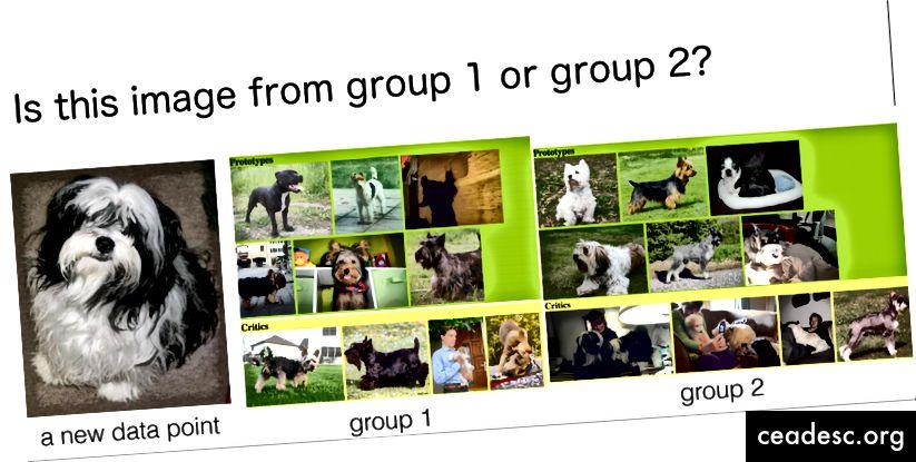 Se pidió a los usuarios que asignaran imágenes de animales al