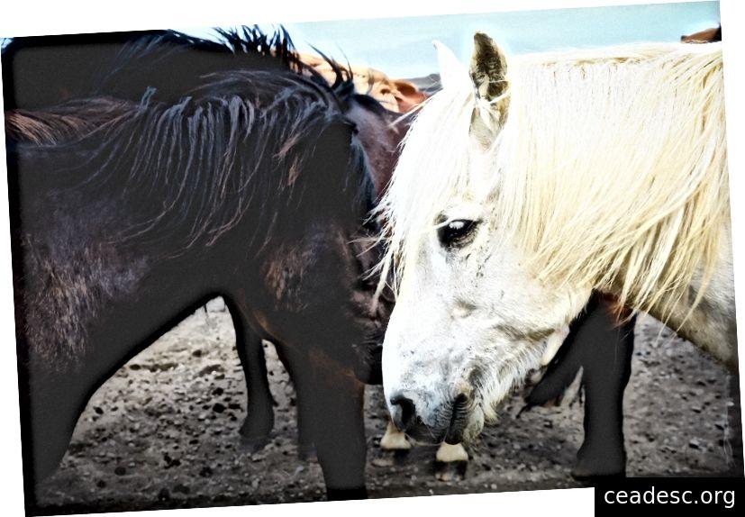 """""""Un cheval gris avec une crinière blanche à côté d'un cheval noir et le reste du troupeau à l'arrière"""" de Stephanie Braconnier sur Unsplash"""