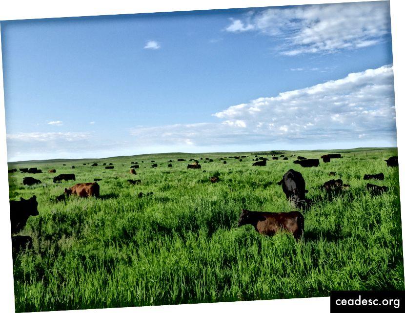 Ranč Gabea Browna Slika: Brown's Ranch