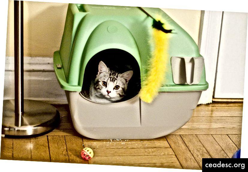 https://commons.wikimedia.org/wiki/File:Cat_house.jpg