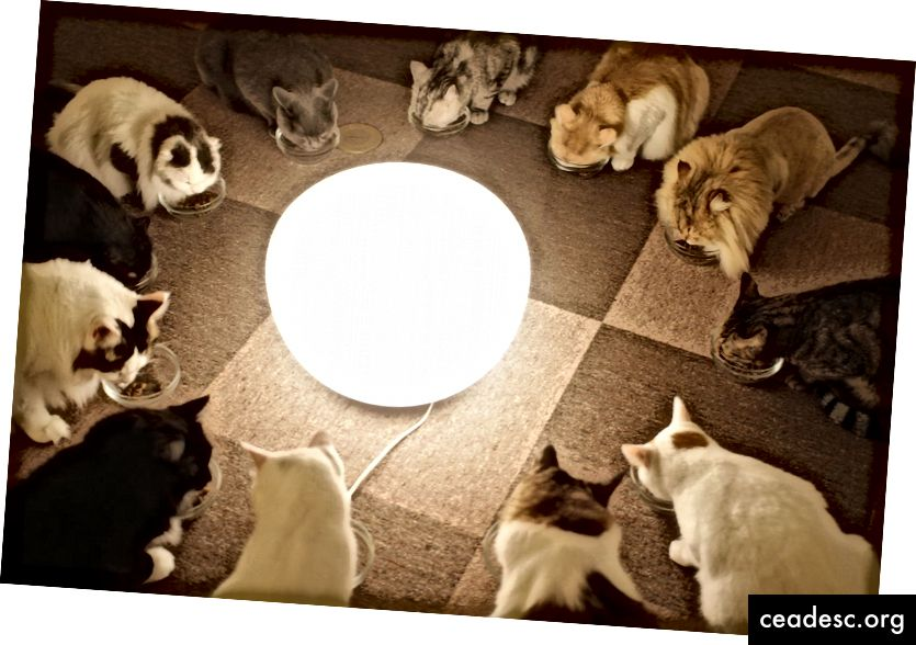 https://commons.wikimedia.org/wiki/File:12_cats_eating_together_around_a_centrally_placed_lamp_in_cat_cafe.jpg