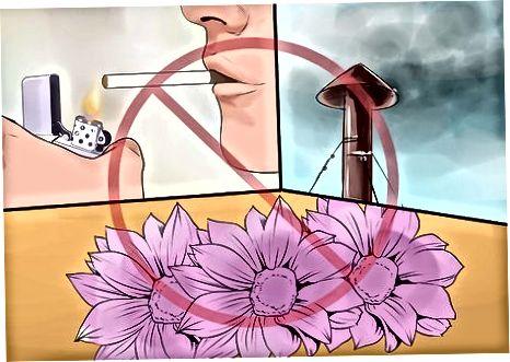 Astma-triggers identificeren
