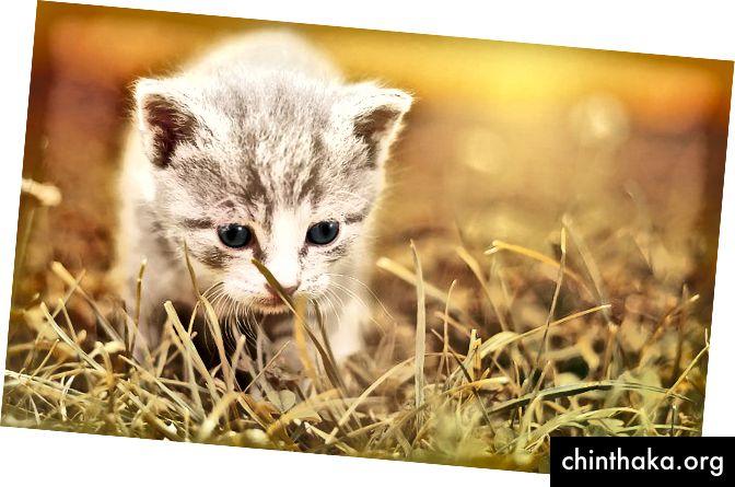 Ein Kätzchenbild, weil ... warum nicht? Pixabay.com