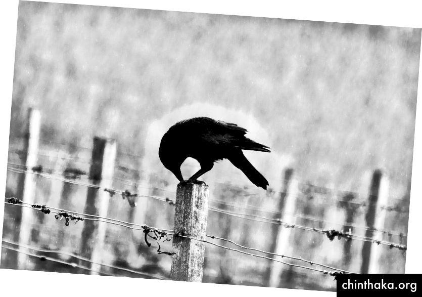 Foto von Hannes Wolf auf Unsplash