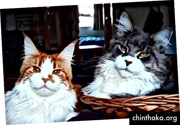 Astrid og Chumbo på Instagram
