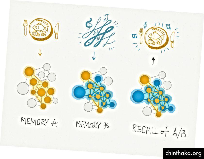 Her gemmer engram A (guld) en hukommelse relateret til et fiskemåltid. Engram B (teal) gemmer en hukommelse af nogle musik, der spillede under måltidet. B deler nogle neuroner til fælles med A. Således er disse erindringer forbundet. Når du tænker på måltidet, kan du måske huske musikken og vice versa.