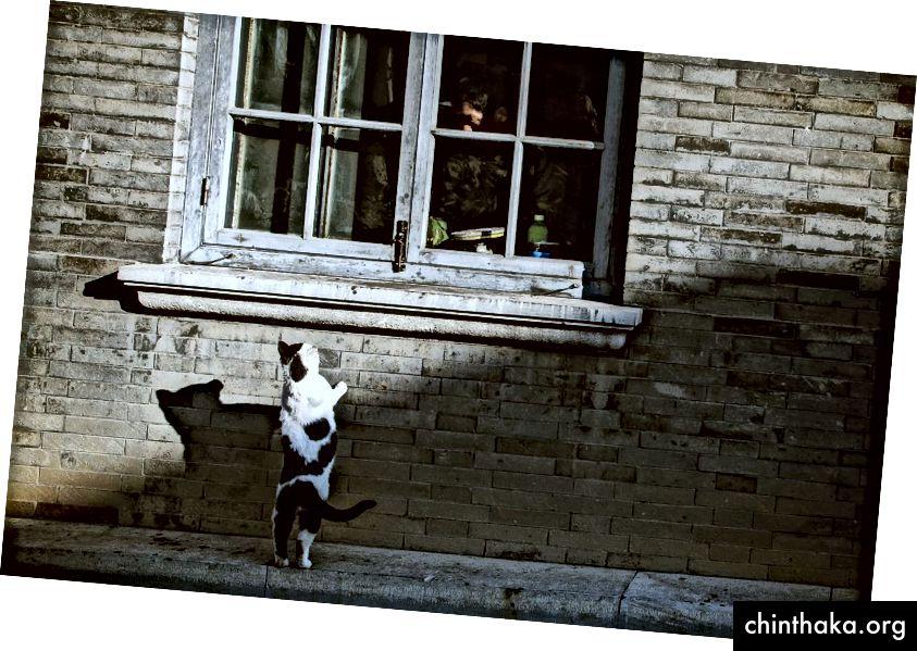 Foto von Bing Han auf Unsplash
