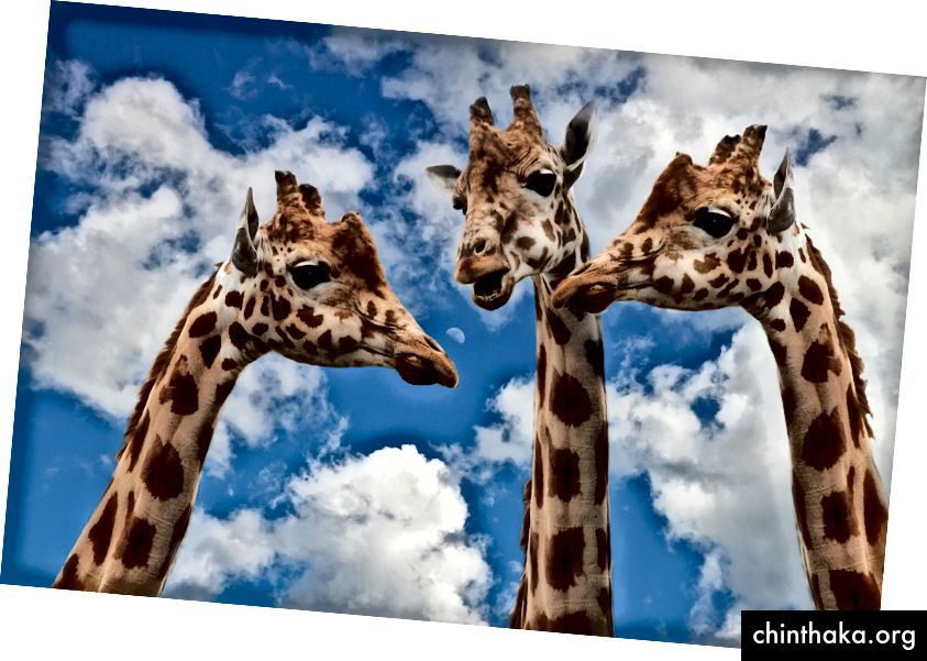 Φωτογραφία από τη Sponchia, Pixabay