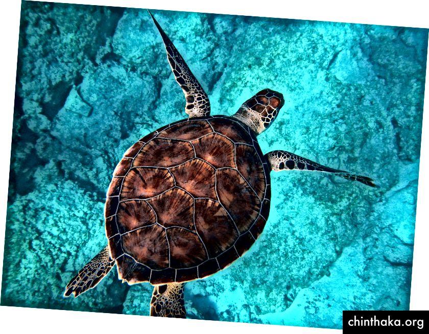 """""""Große Meeresschildkröte, die am Kaputas Beach durch den Ozean schwimmt"""" von Randall Ruiz auf Unsplash"""