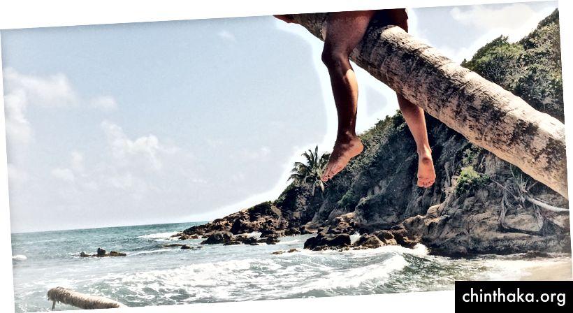 Без трусов в Пуэрто-Рико, застрял на полпути кокосовой пальмы.
