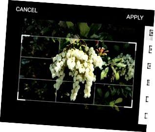 Recorta y cambia la relación de aspecto de una imagen.