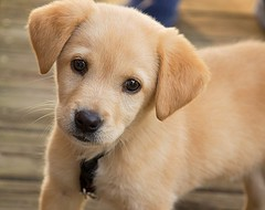 Jonathan Krizによる「Puppy」は、CC BY 2.0の下でライセンスされています。