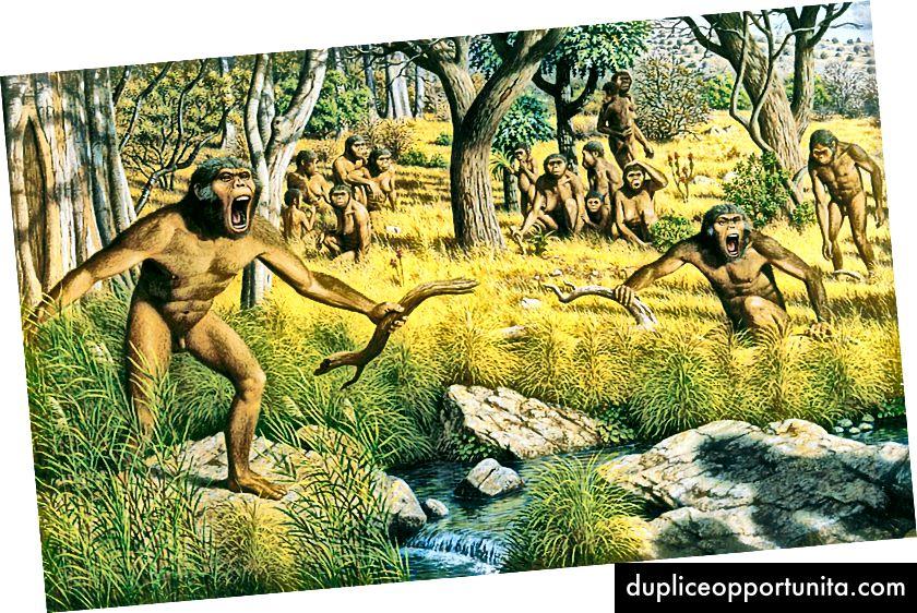 In che modo una banda di scimmie combatte un leone?