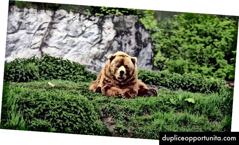 Een beer die gedistribueerde systemen overweegt