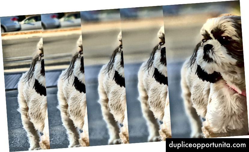 Sama valokuva, useita säätöjä uudella Syvyysohjaimella. Huomaa koiran tausta ja takaosa fokusoitumalla. Kuva: Lance Ulanoff