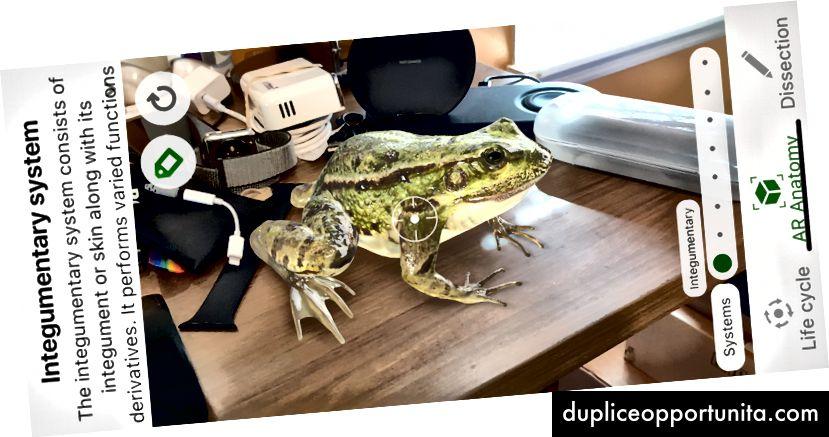Froggipedian kanssa laitin tämän elämällisen sammakon pöydälleni. Kuva: Lance Ulanoff / Froggipedia