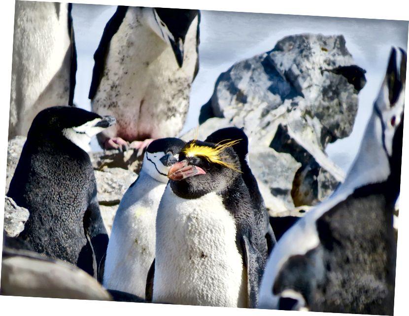 SH - Antarktika 2016