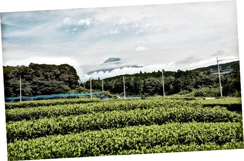 Fuji MARUMO Çay Bahçesi