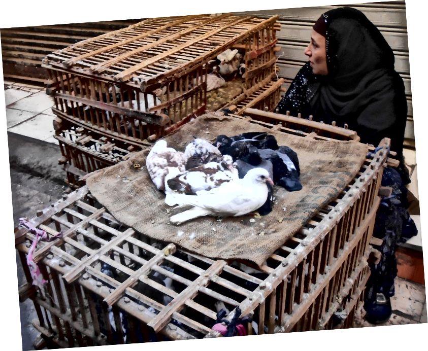 Radwa quản lý những con bồ câu còn sót lại | © Mariam Ghorab