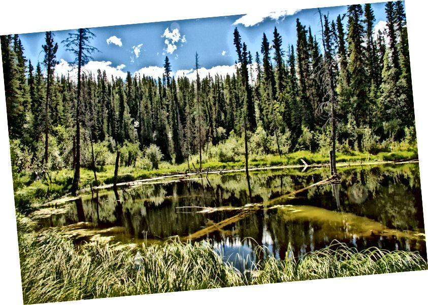 Типове бореальне лісове озеро, Flickr