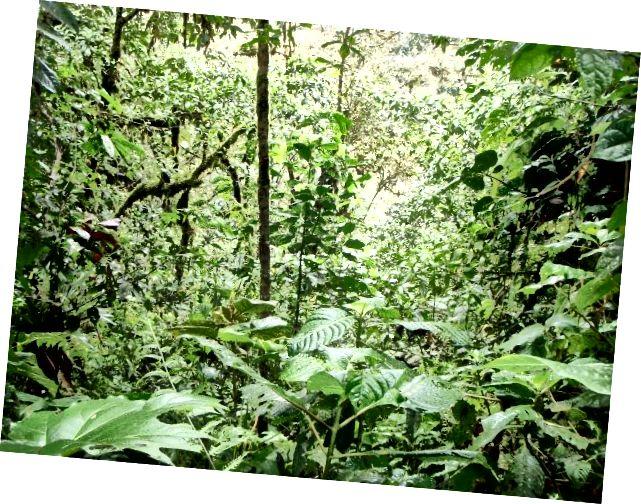 Повернення в джунглі
