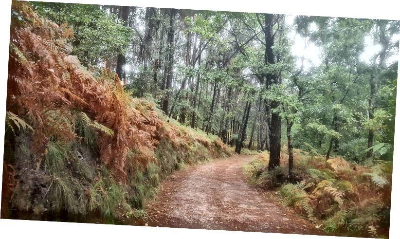 Một nơi nào đó trên Camino