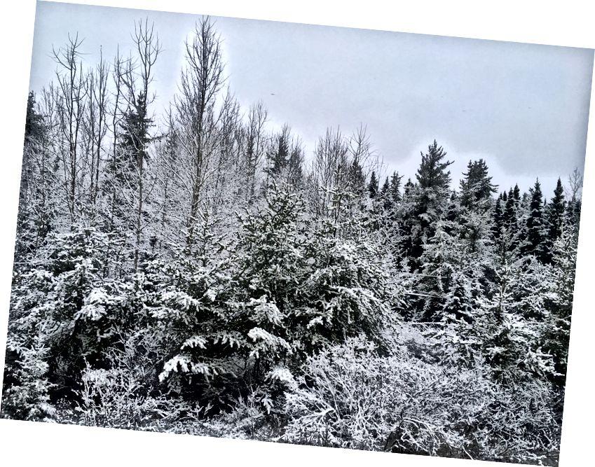 Сонце, сніг та срібний лайнер