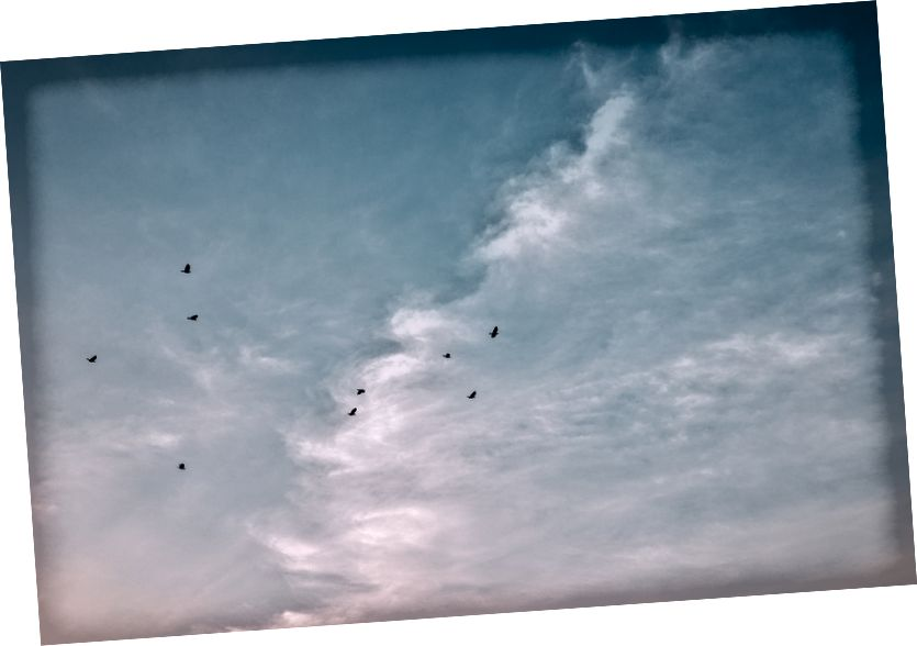 Birds: Fotoğraf Bady Qb