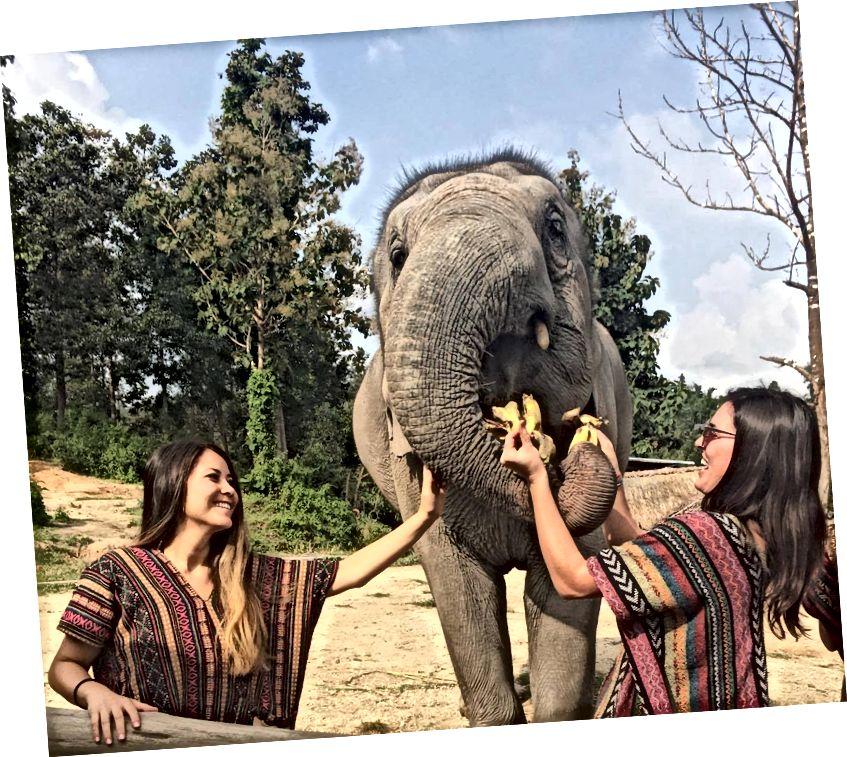 Святилище джунглів слона в Чіангмаї (це етично хороша компанія для того, як вони поводяться зі слонами, а не їздять до них)
