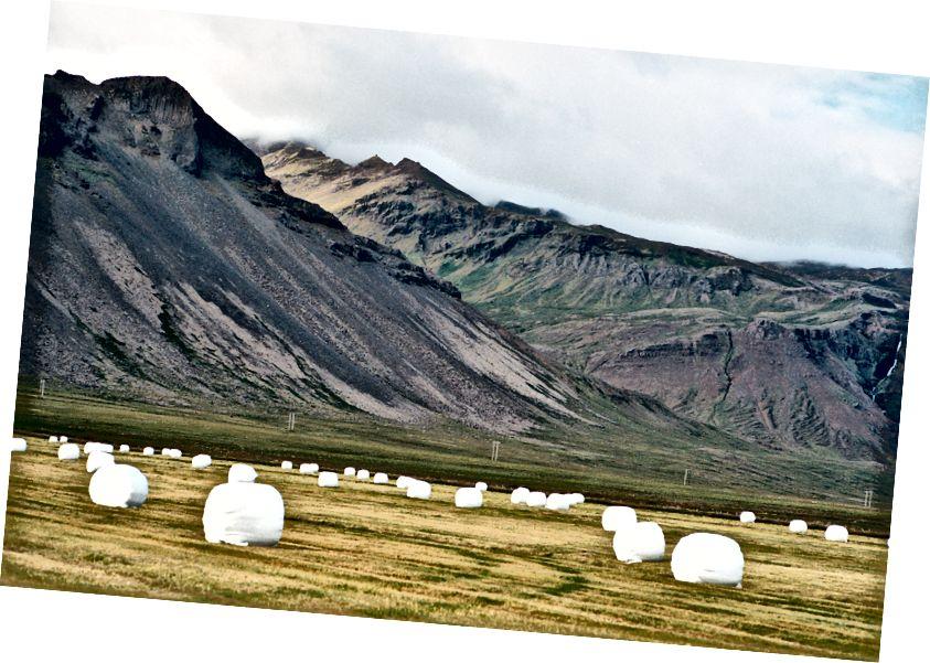 Alternative Version von Schafheuballen, die ihre Zeit auf isländischen Feldern verbringen und nicht im Fokus stehen. Kodak Portra 400