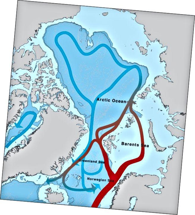 Океанські течії в Арктиці. www.arcticsystem.no
