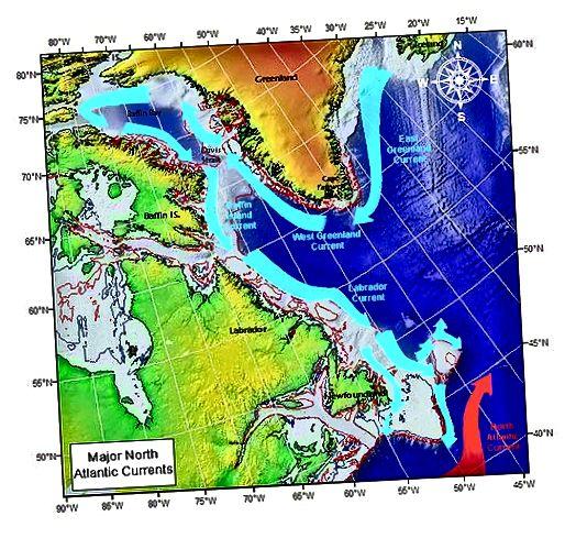 https://en.wikipedia.org/wiki/Baffin_Island_Current