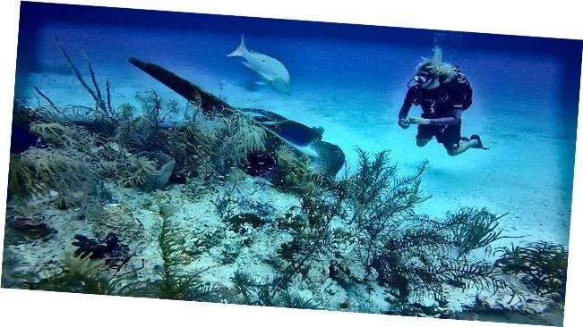Kehilangan kepelbagaian biologi [terumbu karang, bakau]