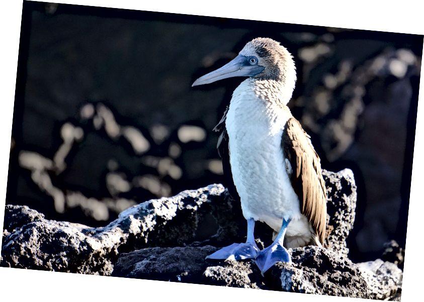 Перша тварина, яка привітала нас зранку, - знаменитий синій ніс