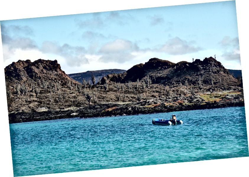Панга залишає нас гуляти по маленькому острову, знаходячи по дорозі купу тварин