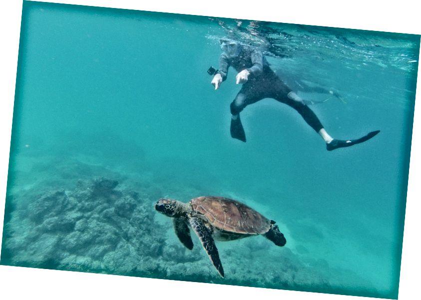 Ми також поплавали з красивою морською черепахою