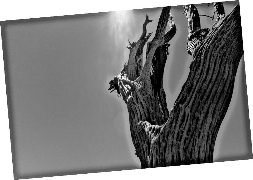 https://www.flickr.com/photos/foam/34854799102/in/album-72157681429258454/