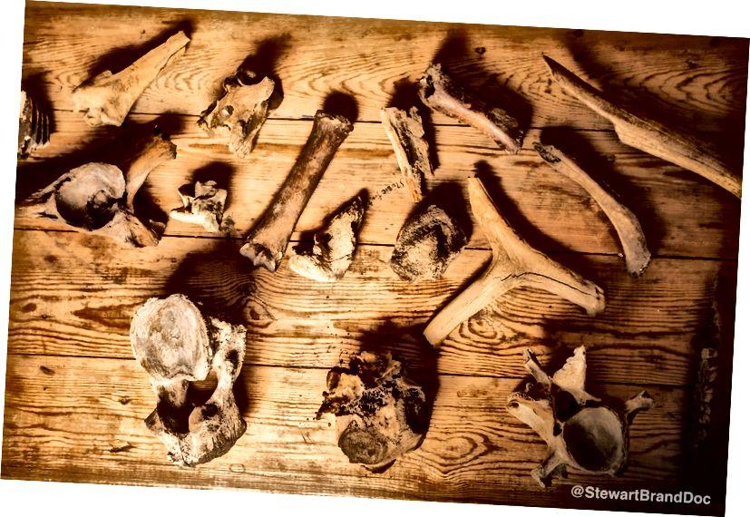 Деякі кістки знайдені у Дувані