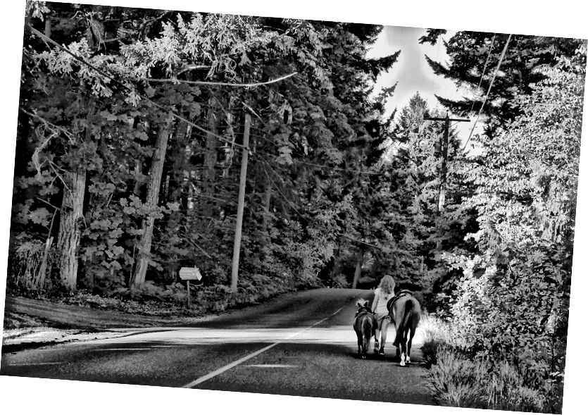 Người phụ nữ dắt một con ngựa ra ngoài Duncan, British Columbia, Canada.