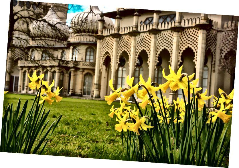 Bahar nergis Pavilion yanında
