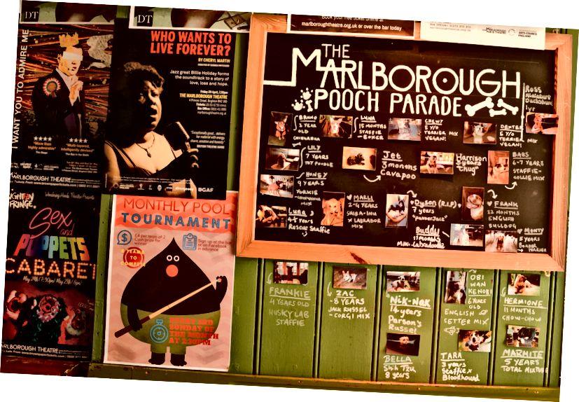 Marlborough yavruları çok seviyor, sık sık köpek müşterileriyle dolu bir tahtaları var!